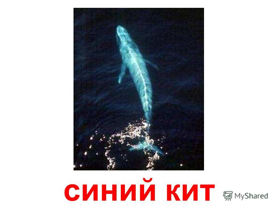 горбатый кит Горбатый кит
