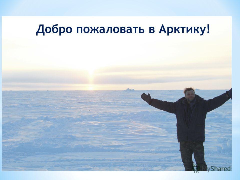 Добро пожаловать в Арктику!
