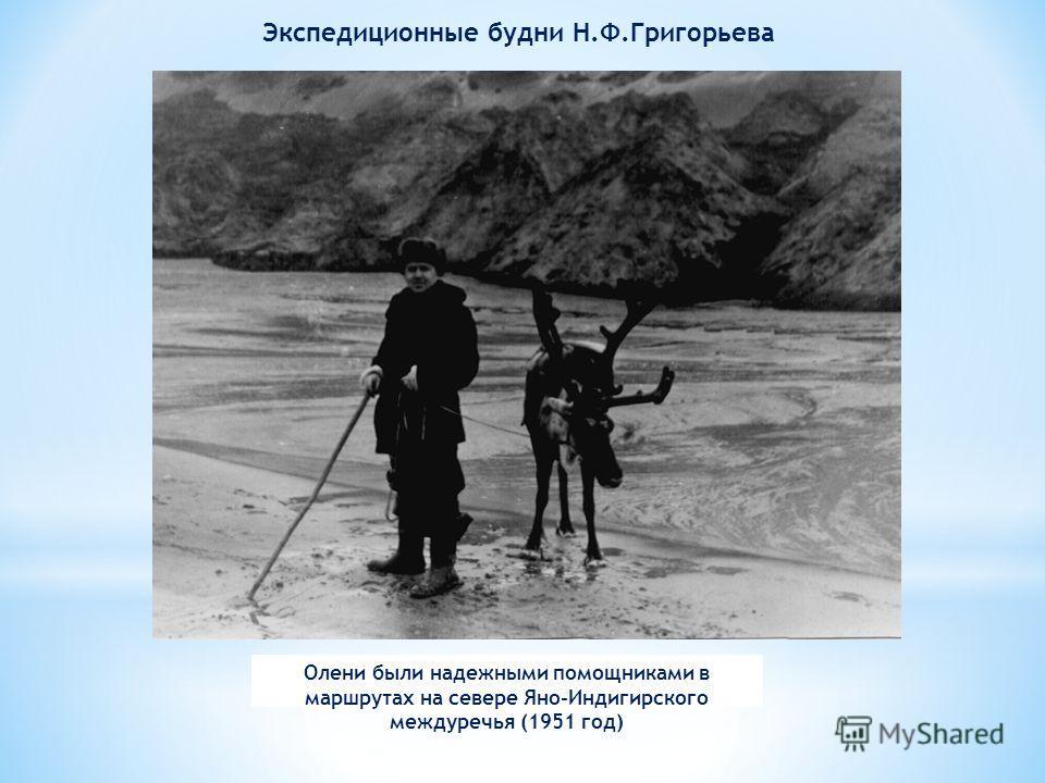 Олени были надежными помощниками в маршрутах на севере Яно-Индигирского междуречья (1951 год) Экспедиционные будни Н.Ф.Григорьева