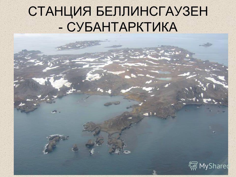 СТАНЦИЯ БЕЛЛИНСГАУЗЕН - СУБАНТАРКТИКА
