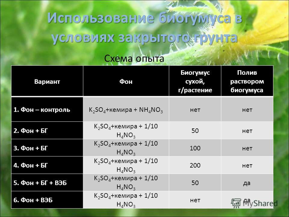 Использование биогумуса в условиях закрытого грунта ВариантФон Биогумус сухой, г/растение Полив раствором биогумуса 1. Фон – контрольK 2 SO 4 +кемира + NH 4 NO 3 нет 2. Фон + БГ K 2 SO 4 +кемира + 1/10 H 4 NO 3 50нет 3. Фон + БГ K 2 SO 4 +кемира + 1/