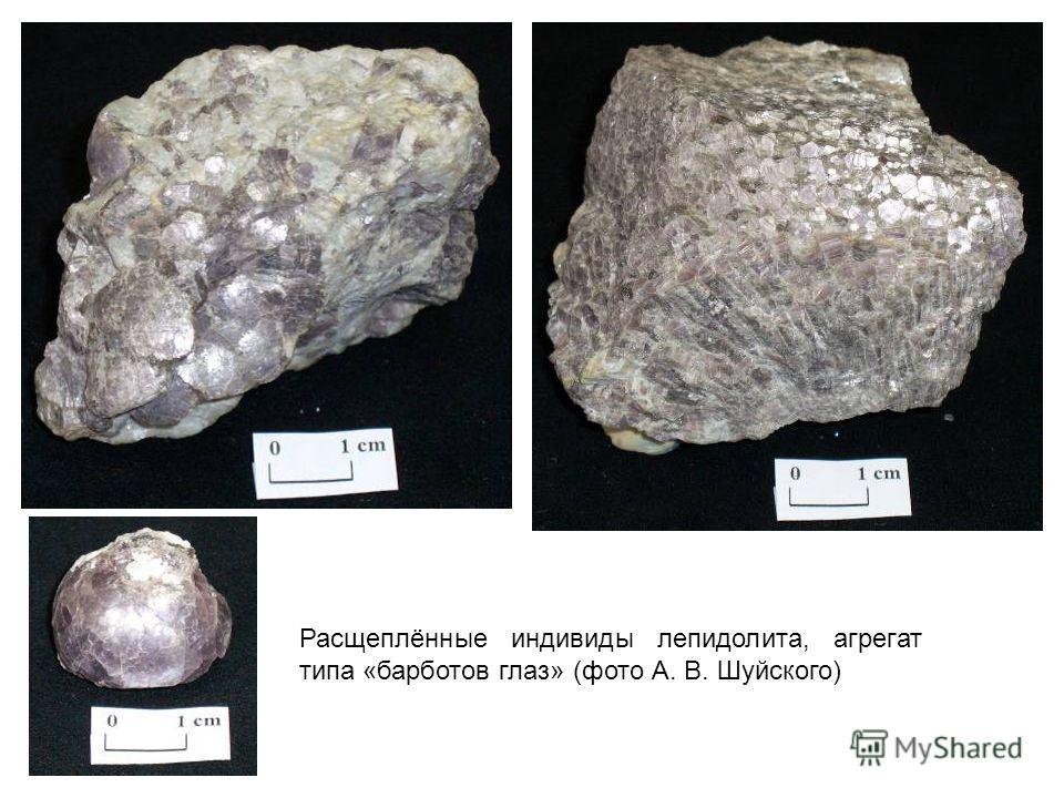 Расщеплённые индивиды лепидолита, агрегат типа «барботов глаз» (фото А. В. Шуйского)