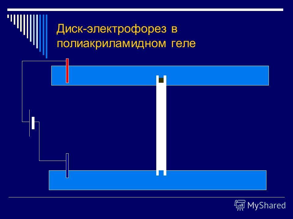 Диск-электрофорез в полиакриламидном геле