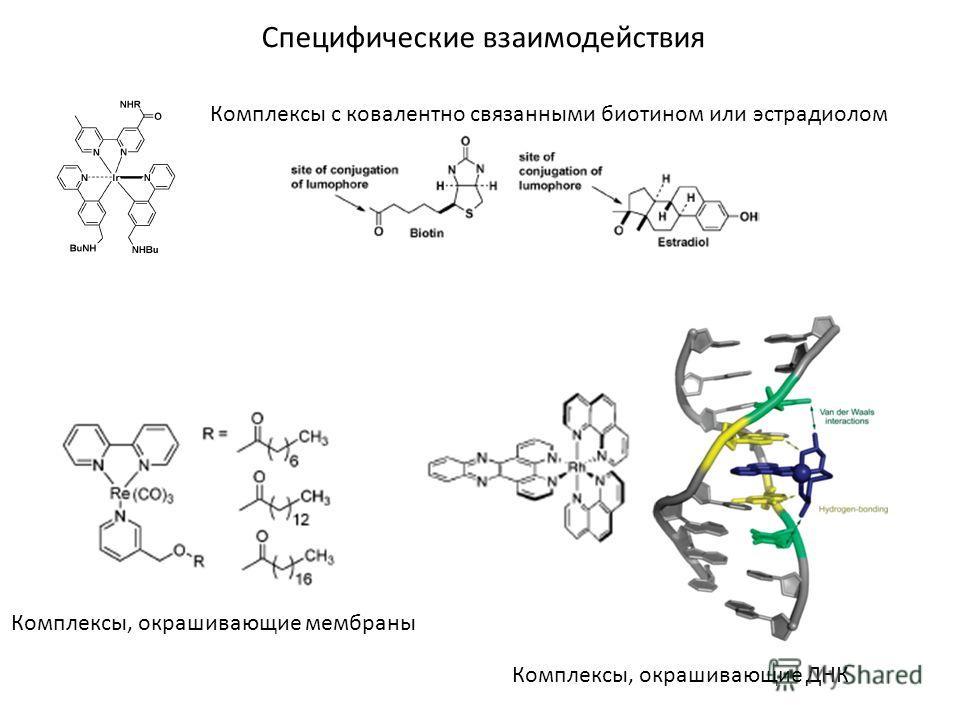 Специфические взаимодействия Комплексы с ковалентно связанными биотином или эстрадиолом Комплексы, окрашивающие мембраны Комплексы, окрашивающие ДНК