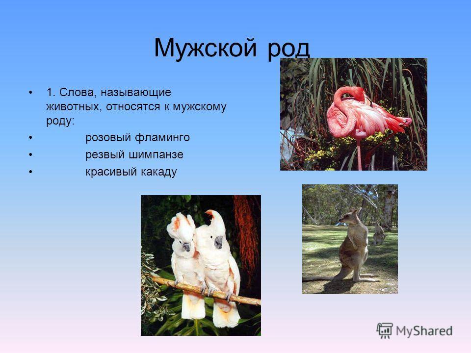 Мужской род 1. Слова, называющие животных, относятся к мужскому роду: розовый фламинго резвый шимпанзе красивый какаду