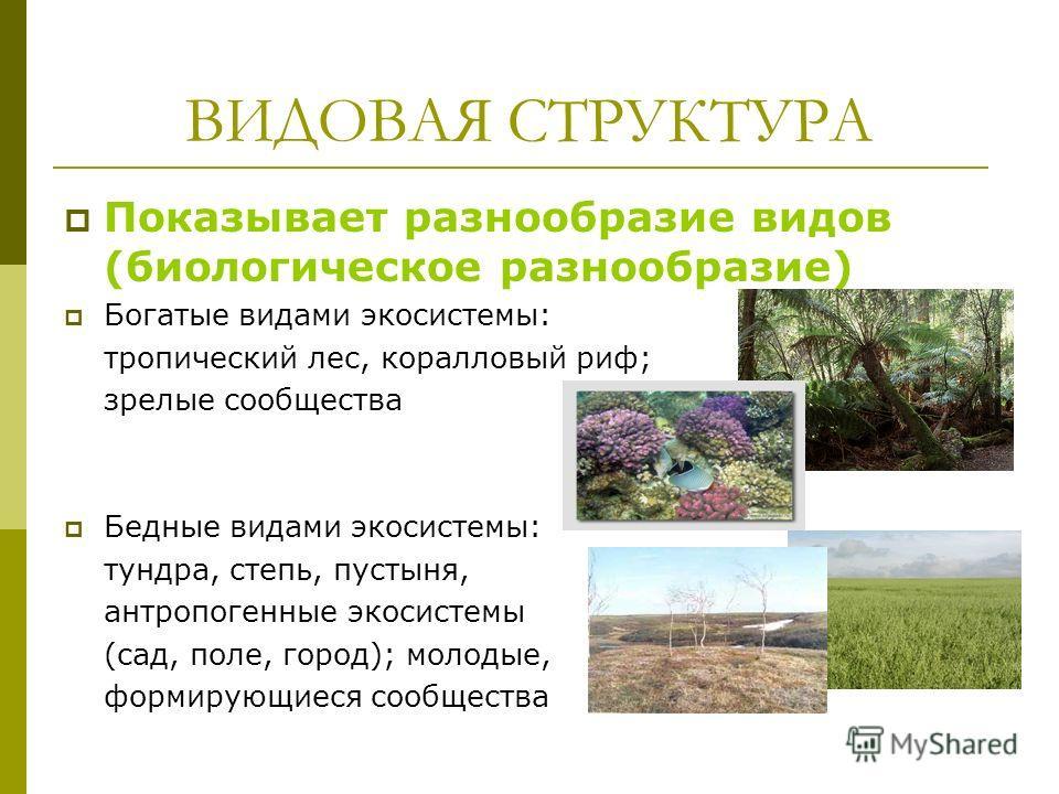 ВИДОВАЯ СТРУКТУРА Показывает разнообразие видов (биологическое разнообразие) Богатые видами экосистемы: тропический лес, коралловый риф; зрелые сообщества Бедные видами экосистемы: тундра, степь, пустыня, антропогенные экосистемы (сад, поле, город);