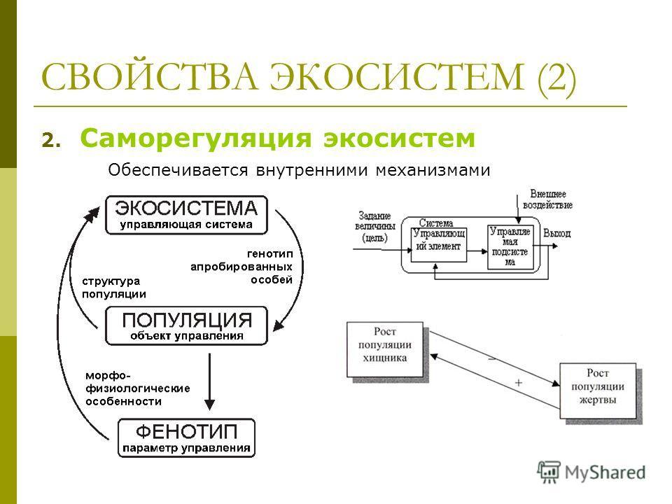 СВОЙСТВА ЭКОСИСТЕМ (2) 2. Саморегуляция экосистем Обеспечивается внутренними механизмами
