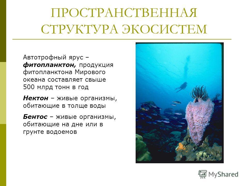 ПРОСТРАНСТВЕННАЯ СТРУКТУРА ЭКОСИСТЕМ Автотрофный ярус – фитопланктон, продукция фитопланктона Мирового океана составляет свыше 500 млрд тонн в год Нектон – живые организмы, обитающие в толще воды Бентос – живые организмы, обитающие на дне или в грунт