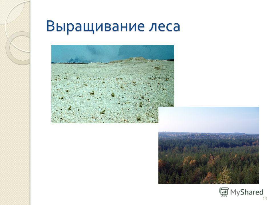 Выращивание леса 13