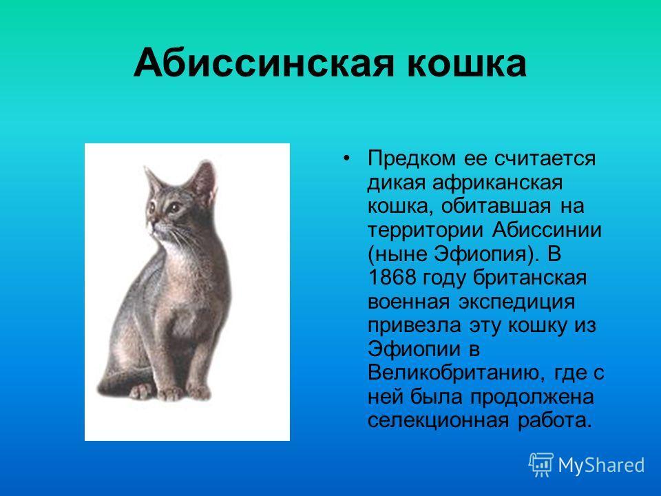 Породы кошек Лейман Денис