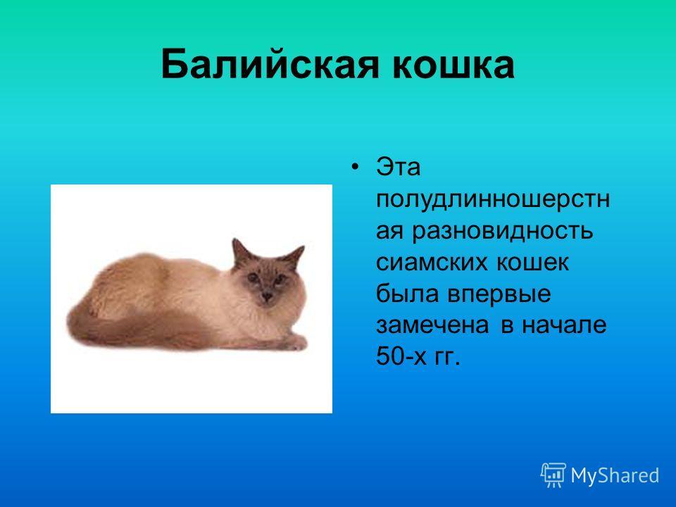 Ангорские кошки, вероятно древнейшая длинношерстная порода, происходят из Анкары, столицы Турции, где проживают и поныне. Ангорская кошка