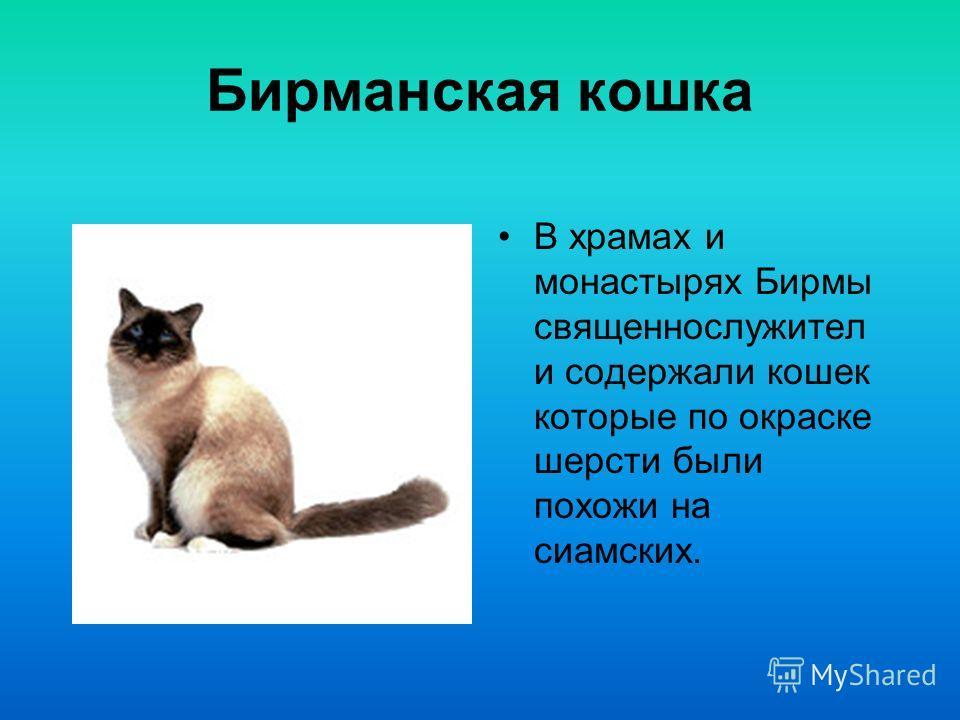 Бенгальская кошка В начале 60-х годов в США был предпринят эксперимент по скрещиванию домашней короткошерстной кошки и азиатским леопардовым котом.