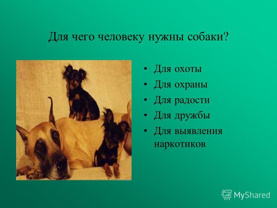 Какие виды собак бывают! 1) охотнечьи 2) полицеиские 3) домашние 4) бездомные