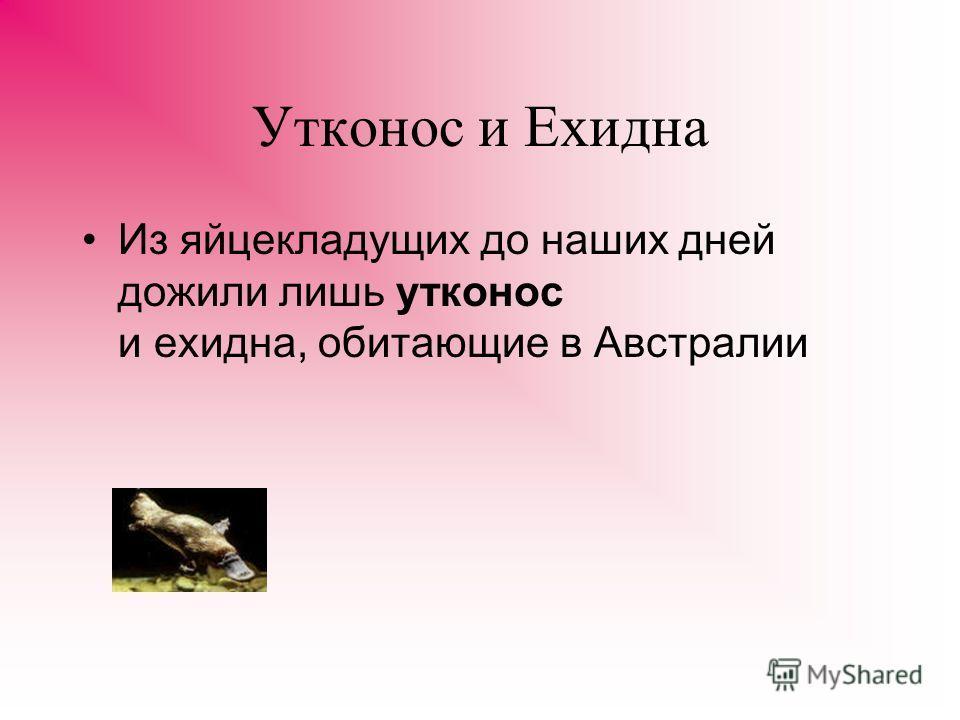 Утконос 28.Утконос - друг человека... отличаться наличием в левом верхнем углу логотипа с изображением милого зверя утконоса
