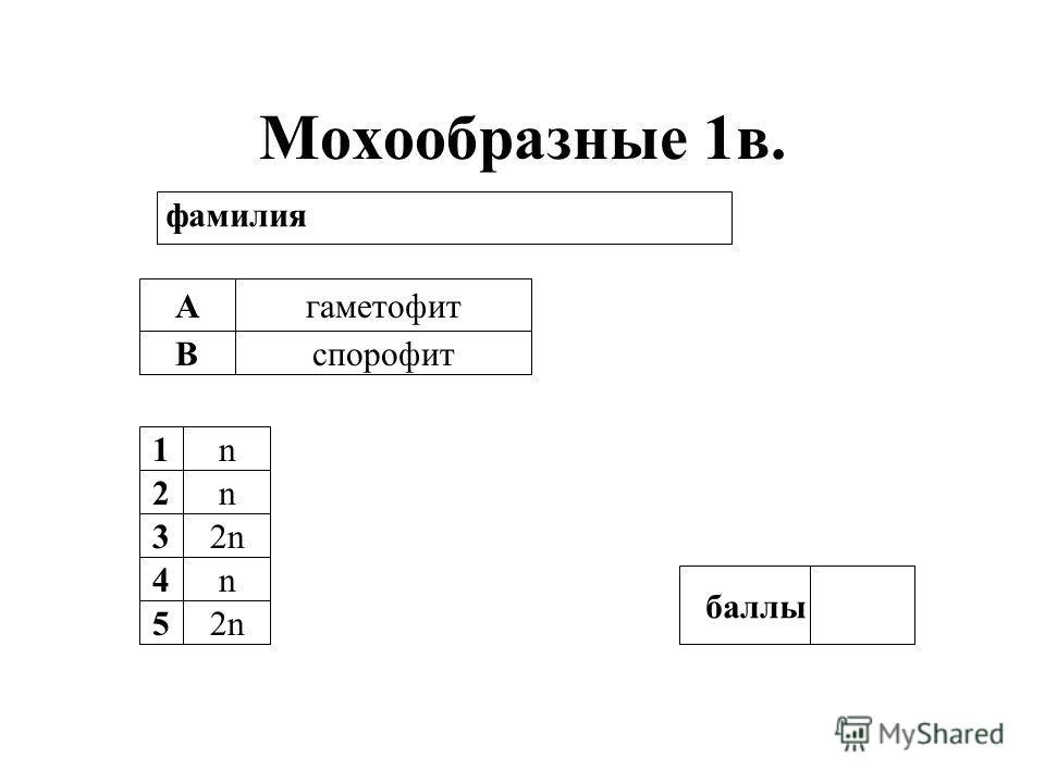 Мохообразные 1в. А В гаметофит спорофит 1n 2n 32n 4n 5 баллы фамилия