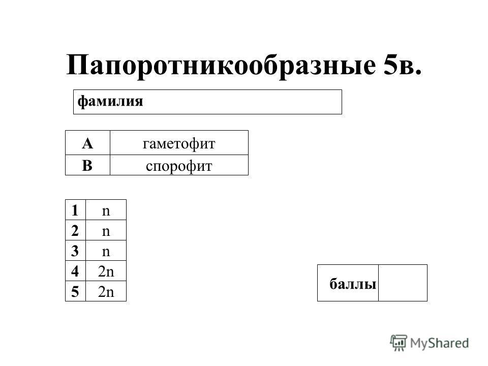 Папоротникообразные 5в. А В гаметофит спорофит 1n 2n 3n 42n2n 52n баллы фамилия