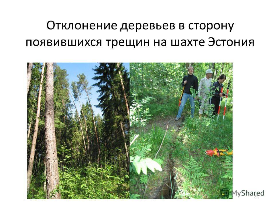 Отклонение деревьев в сторону появившихся трещин на шахте Эстония 22