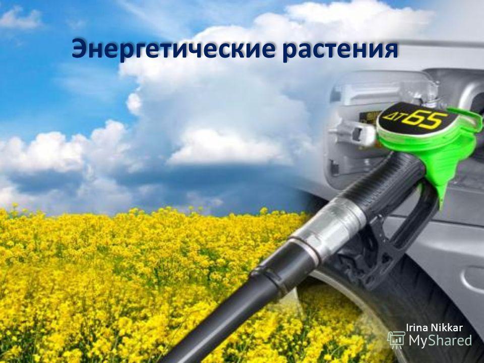 Энергетические растения Irina Nikkar