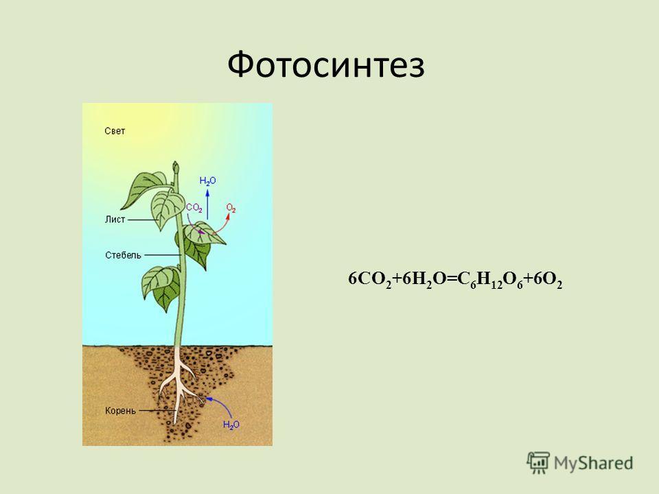 Фотосинтез 6CO 2 +6H 2 O=C 6 H 12 O 6 +6O 2