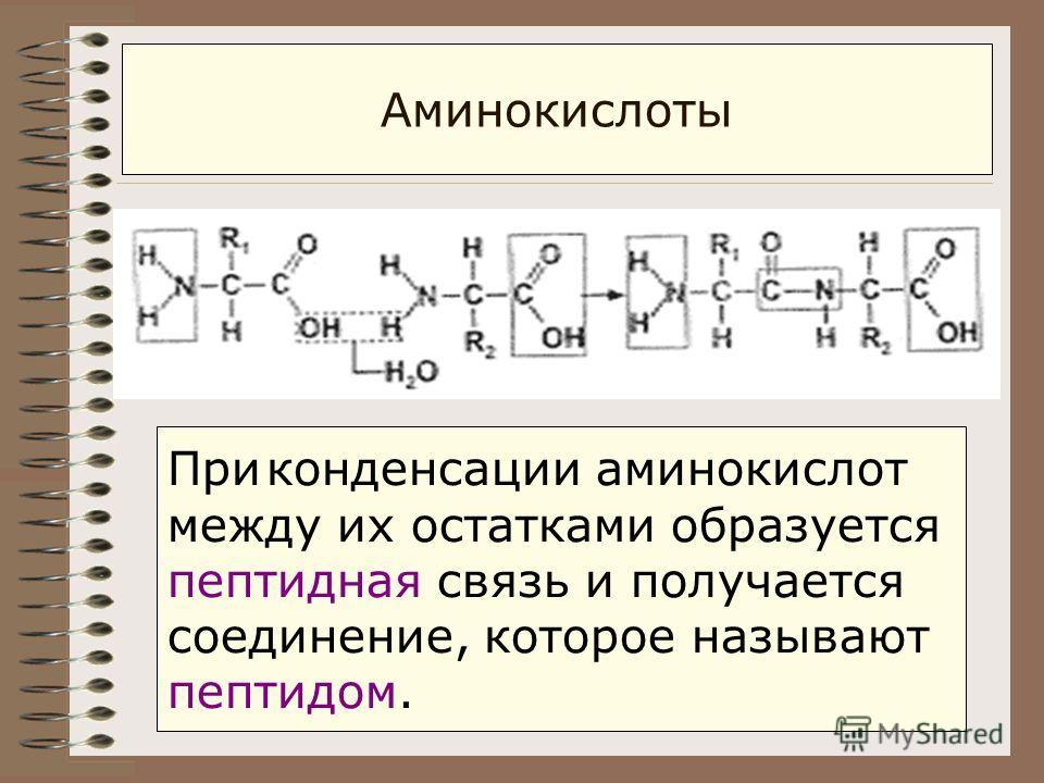 Аминокислоты При конденсации аминокислот между их остатками образуется пептидная связь и получается соединение, которое называют пептидом.