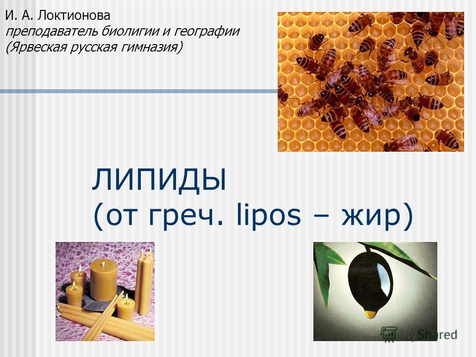 ЛИПИДЫ (от греч. lipos – жир) И. А. Локтионова преподаватель биолигии и географии (Ярвеская русская гимназия)