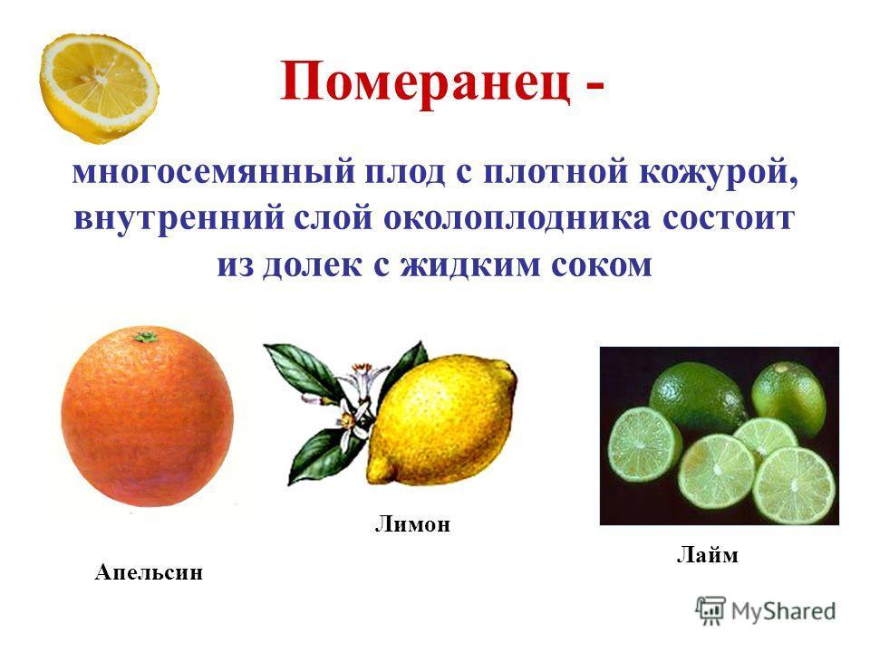 Померанец - многосемянный плод с плотной кожурой, внутренний слой околоплодника состоит из долек с жидким соком Апельсин Лимон Лайм