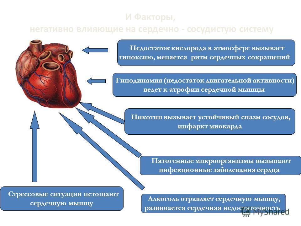 И Факторы, негативно влияющие на сердечно - сосудистую систему Недостаток кислорода в атмосфере вызывает гипоксию, меняется ритм сердечных сокращений Гиподинамия (недостаток двигательной активности) ведет к атрофии сердечной мышцы Никотин вызывает ус