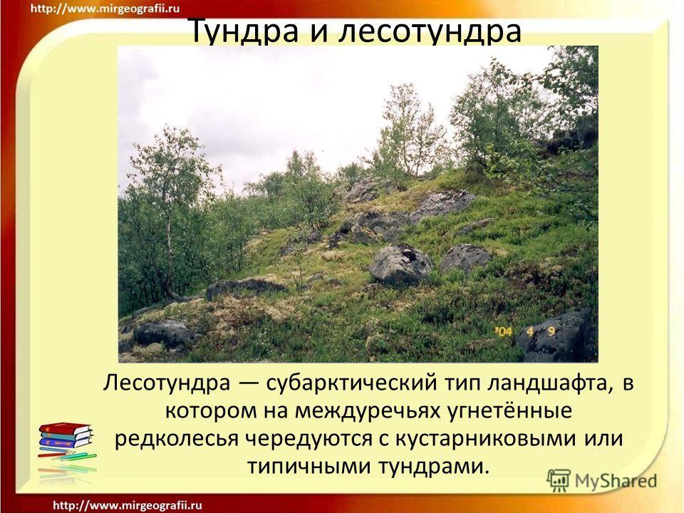 Тундра и лесотундра Лесотундра субарктический тип ландшафта, в котором на междуречьях угнетённые редколесья чередуются с кустарниковыми или типичными тундрами.