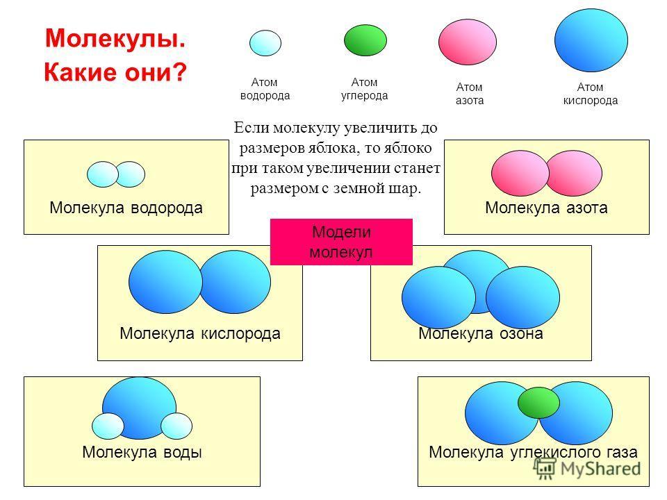 Молекулы. Какие они? Атом водорода Атом азота Атом кислорода Молекула кислорода Молекула водорода Молекула озона Молекула азота Атом углерода Молекула водыМолекула углекислого газа Модели молекул Если молекулу увеличить до размеров яблока, то яблоко