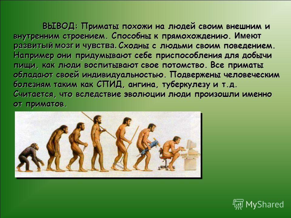 ВЫВОД: Приматы похожи на людей своим внешним и внутренним строением. Способны к прямохождению. Имеют развитый мозг и чувства. Сходны с людьми своим поведением. Например они придумывают себе приспособления для добычи пищи, как люди воспитывают свое по
