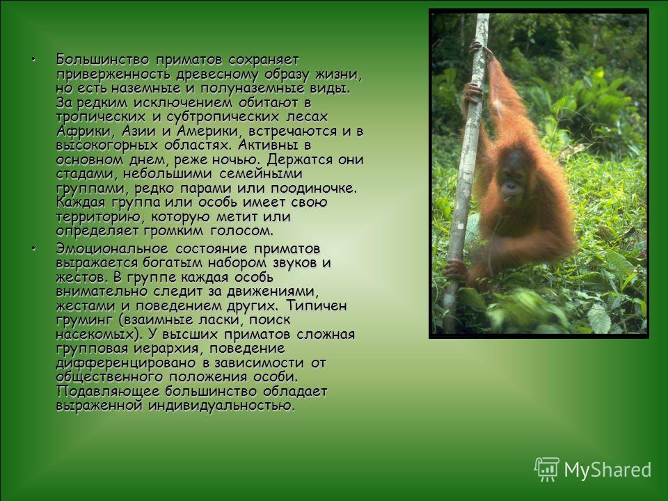 Большинство приматов сохраняет приверженность древесному образу жизни, но есть наземные и полуназемные виды. За редким исключением обитают в тропических и субтропических лесах Африки, Азии и Америки, встречаются и в высокогорных областях. Активны в о