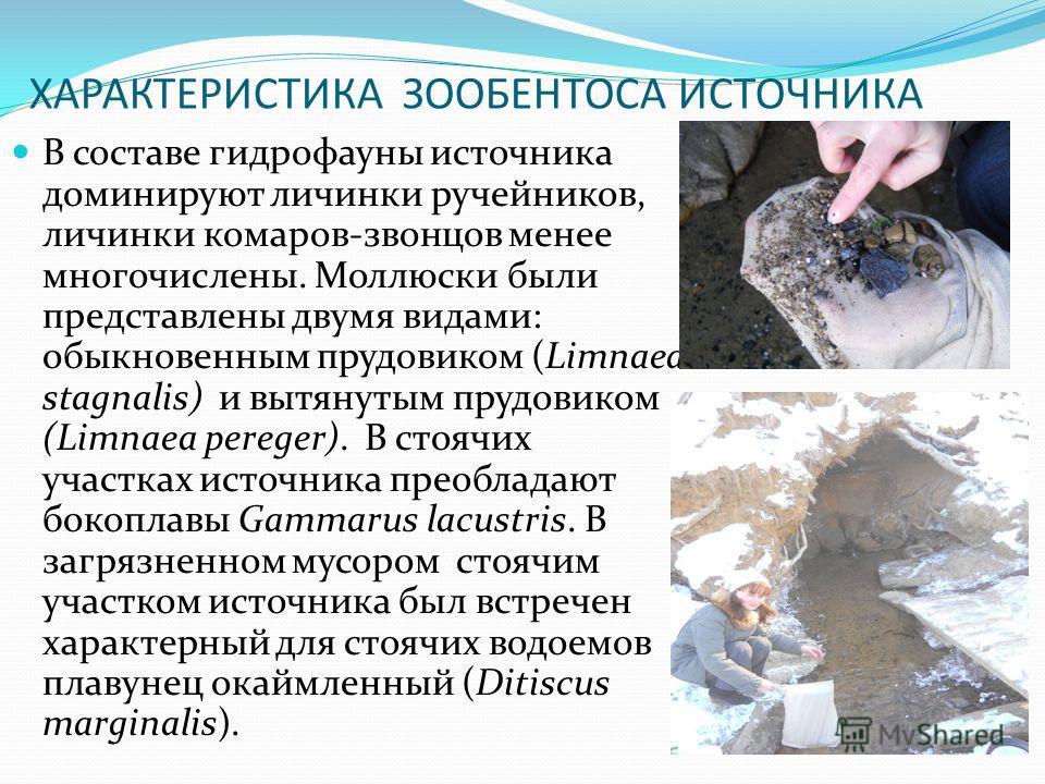 ХАРАКТЕРИСТИКА ЗООБЕНТОСА ИСТОЧНИКА В составе гидрофауны источника доминируют личинки ручейников, личинки комаров-звонцов менее многочислены. Моллюски были представлены двумя видами: обыкновенным прудовиком (Limnaea stagnalis) и вытянутым прудовиком