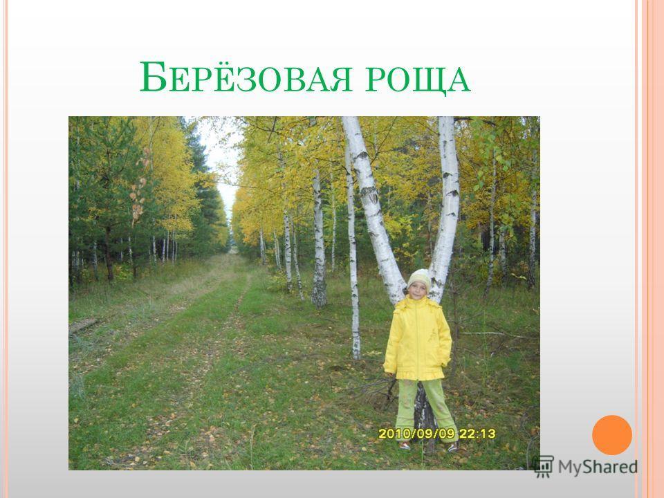 Б ЕРЁЗОВАЯ РОЩА