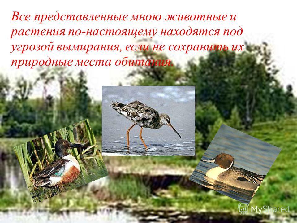 Все представленные мною животные и растения по-настоящему находятся под угрозой вымирания, если не сохранить их природные места обитания.