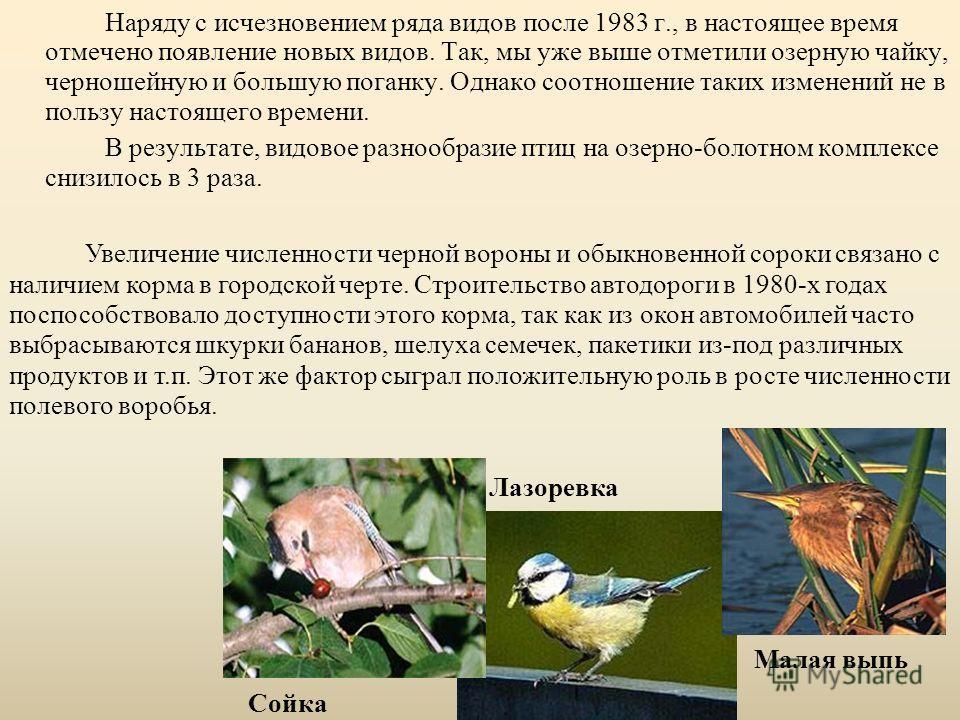 Наряду с исчезновением ряда видов после 1983 г., в настоящее время отмечено появление новых видов. Так, мы уже выше отметили озерную чайку, черношейную и большую поганку. Однако соотношение таких изменений не в пользу настоящего времени. В результате