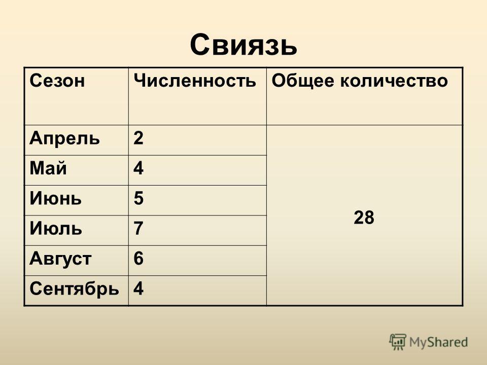 Свиязь СезонЧисленностьОбщее количество Апрель2 28 Май4 Июнь5 Июль7 Август6 Сентябрь4