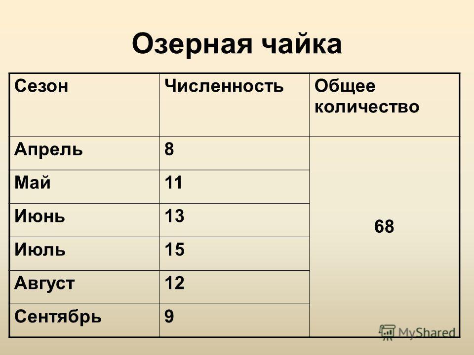 Озерная чайка СезонЧисленностьОбщее количество Апрель8 68 Май11 Июнь13 Июль15 Август12 Сентябрь9