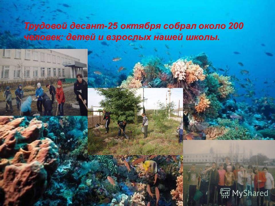 Трудовой десант-25 октября собрал около 200 человек: детей и взрослых нашей школы.