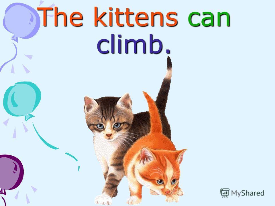 The kittens can climb.