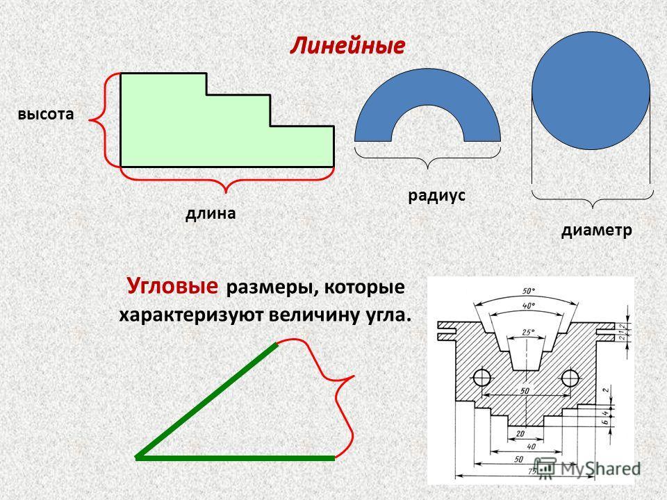 высота длина Линейные диаметр радиус Линейные Угловые размеры, которые характеризуют величину угла.