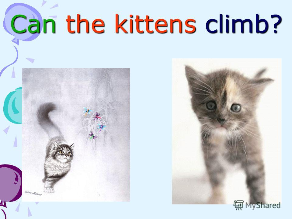 Can the kittens climb?