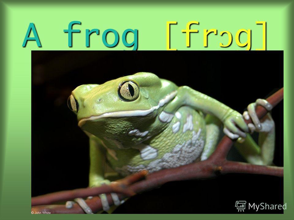 A frog [fr ɔ g]