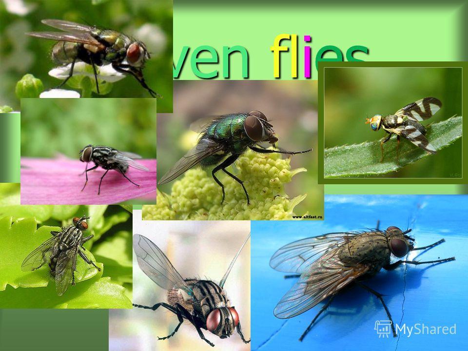 Seven flies