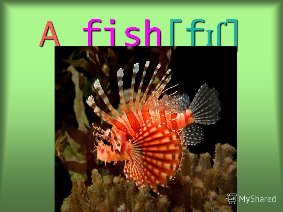 A fish[f ɪʃ ]