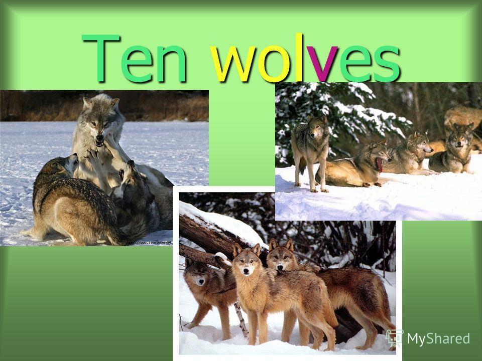 Ten wolves