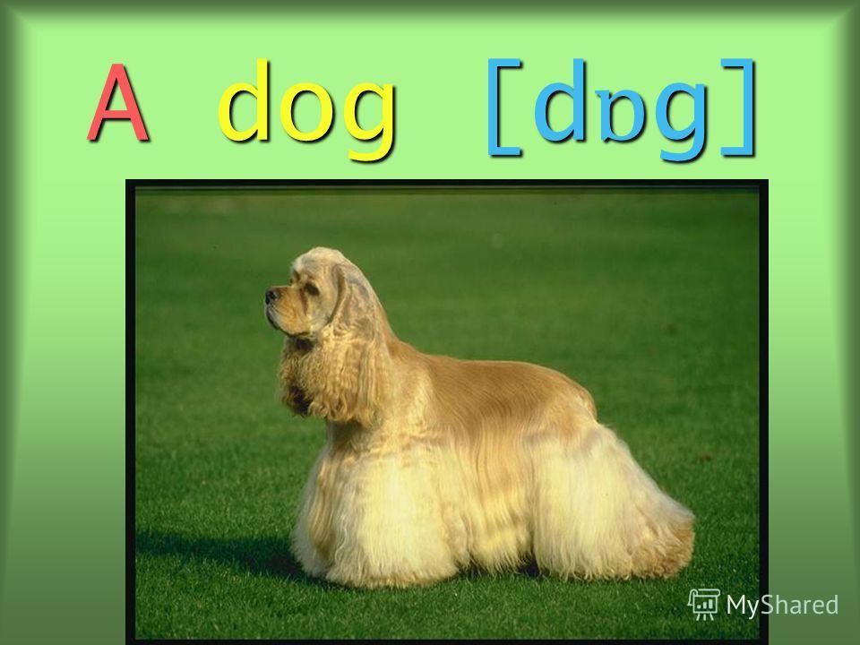 A dog [d ɒ g]