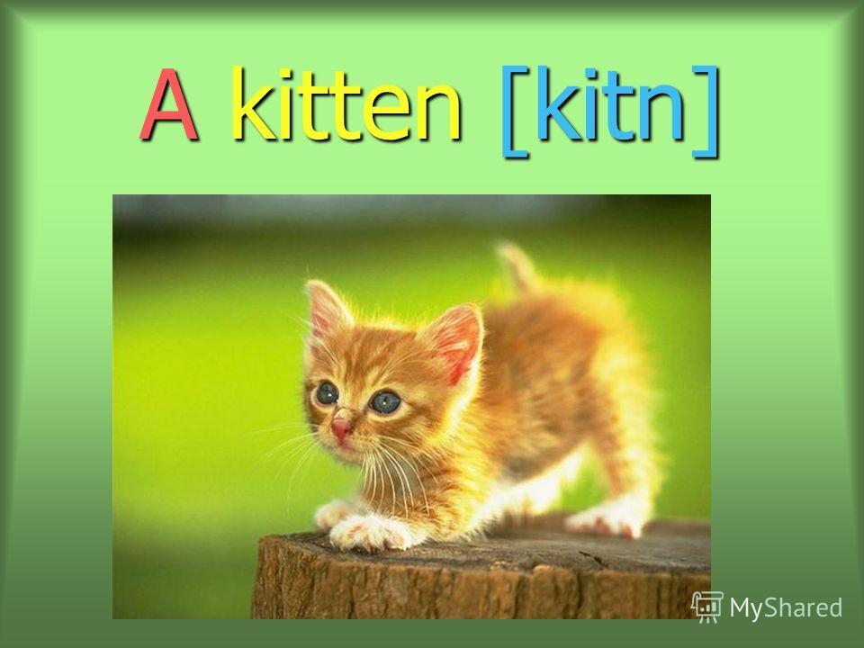 A kitten [kitn]