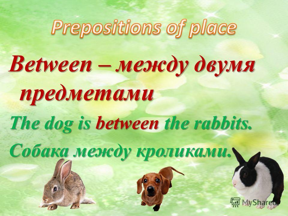 Between – между двумя предметами The dog is between the rabbits. Собака между кроликами.