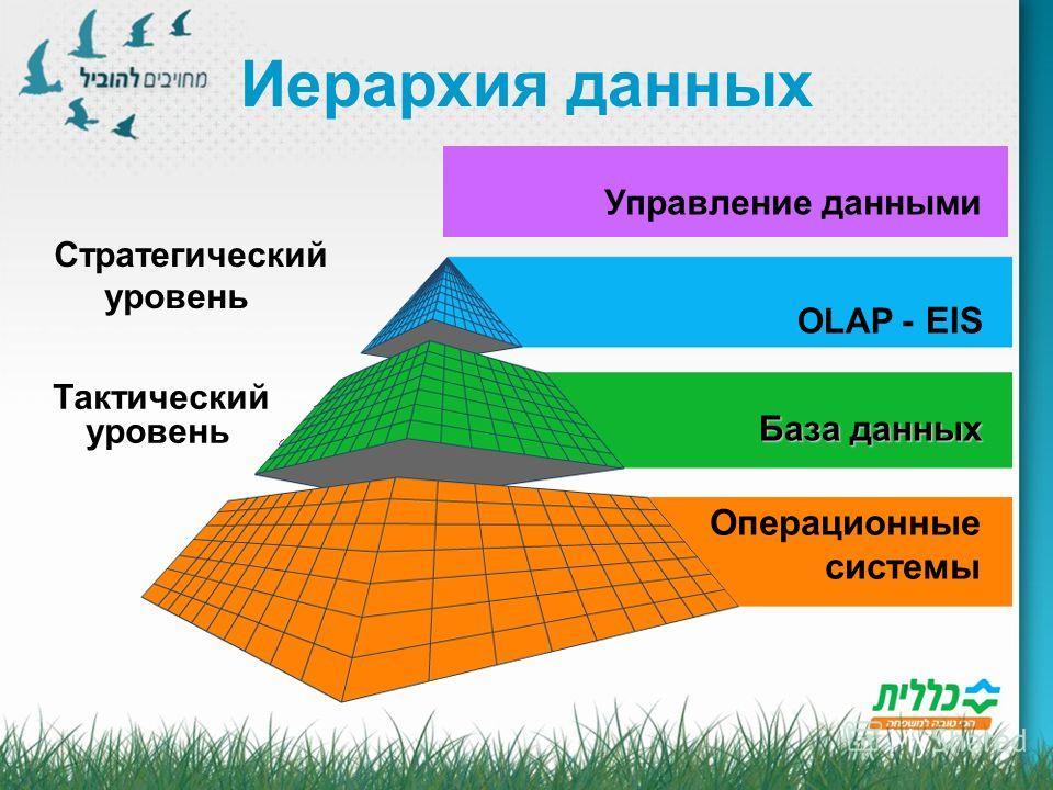 Иерархия данных EIS - OLAP База данных Операционные системы Стратегический уровень Тактический уровень Управление данными