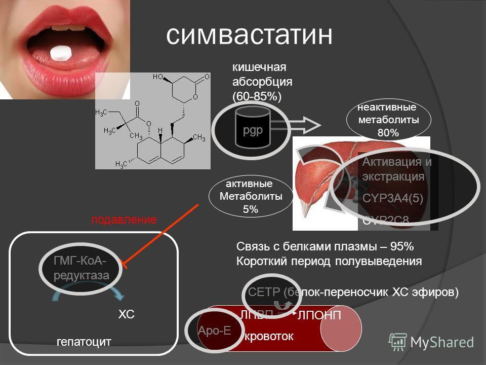ГМГ-КоА- редуктаза симвастатин кишечная абсорбция (60-85%) неактивные метаболиты 80% Активация и экстракция CYP3A4(5) CYP2C8 активные Метаболиты 5% гепатоцит pgp Связь с белками плазмы – 95% Короткий период полувыведения ХС подавление кровоток Apo-E